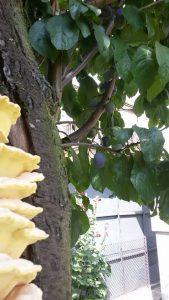 drzewo owocowo - grzybowe 3.jpg